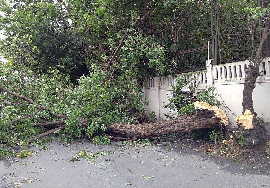 tree fell on the road